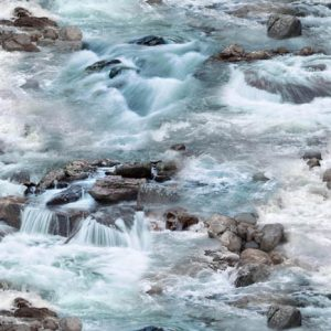 Ursus Americanus 552 Blue River Rapids